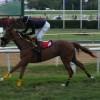 Raceday of June 8, 2013 (The Barbados Fillies Guineas Raceday)