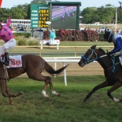 Raceday of August 1, 2013 (The United Insurance Barbados Derby Day)