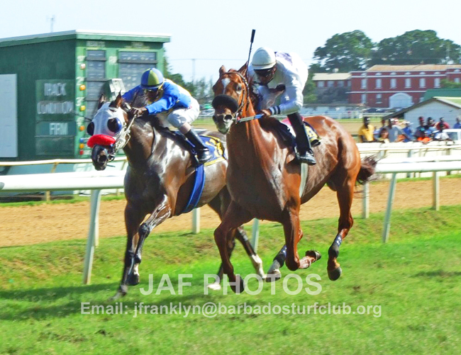 Official Website of the Barbados Turf Club Official Website of the