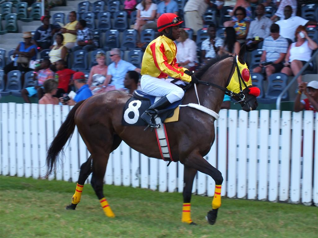 Official Website Of The Barbados Turf Club Raceday Of