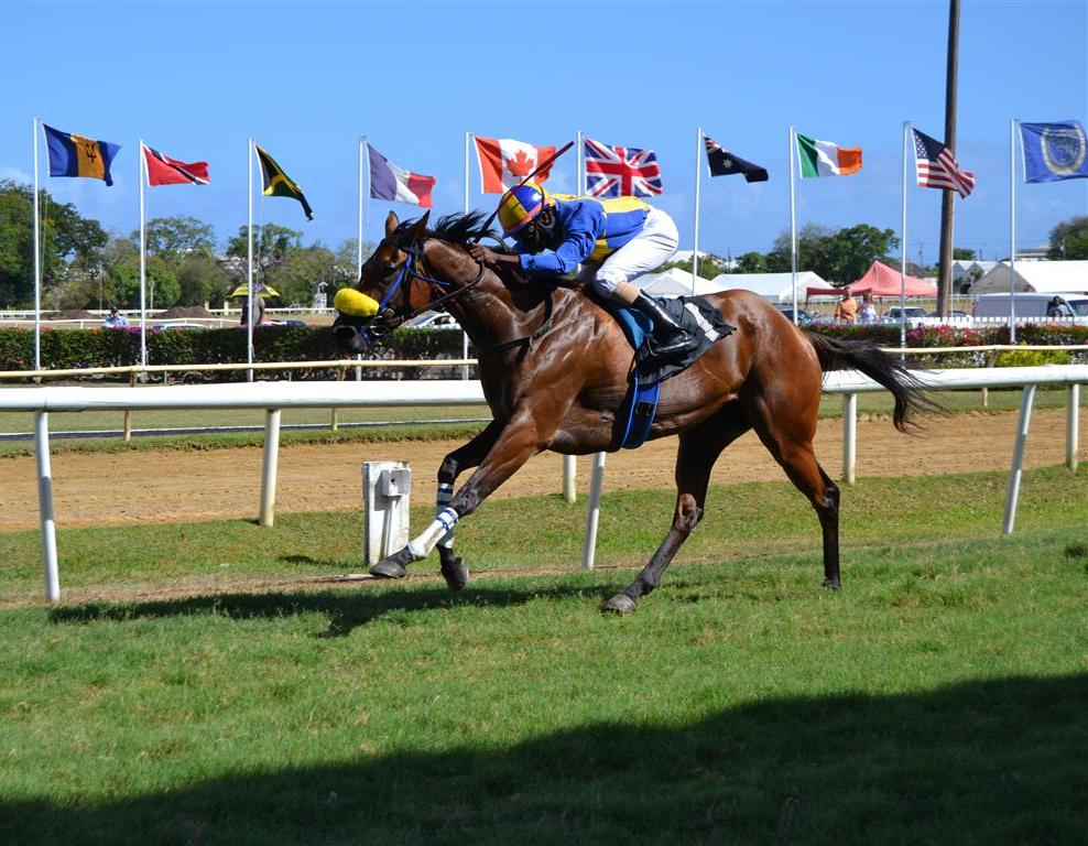 Official Website Of The Barbados Turf Club Raceday Of May